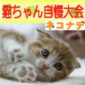 【「ネコナデ」DVD発売記念】猫ちゃん自慢大会開催!